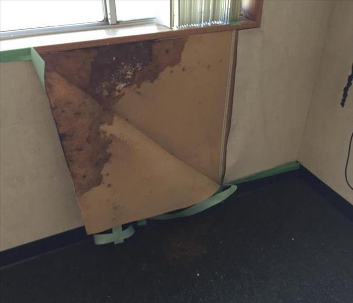 Mold in a School